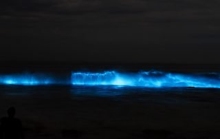 Bioluminescence-Water Views-Coaching