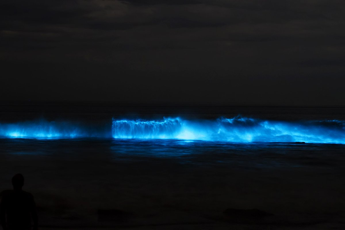 Bioluminescence-Water Views-Coaching