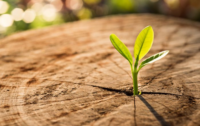 Hope Anger Courage New Life concept with seedling growing sprout (tree).business development symbolic.