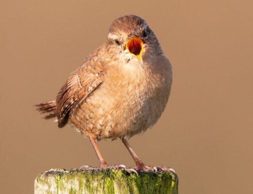 Last Word Bird